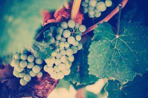 wine achaia clauss